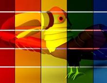 Spectrum Toucan